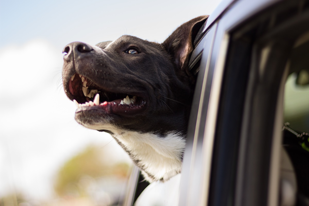 how to travel well with a dog in your car